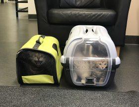 veterinärbesök