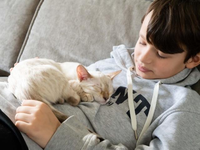 Bengalkattunge sover i pojkes famn